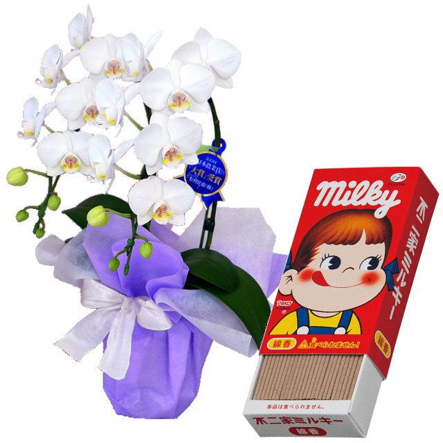 ミディ胡蝶蘭 白色 2本立ち カメヤマのお線香 ミルキーの香りのミニ寸線香 セット