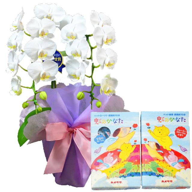 特選ミディ胡蝶蘭 2本立ち 白色 4号鉢 ペットお供えラッピング 虹のかなた線香ローソクセット