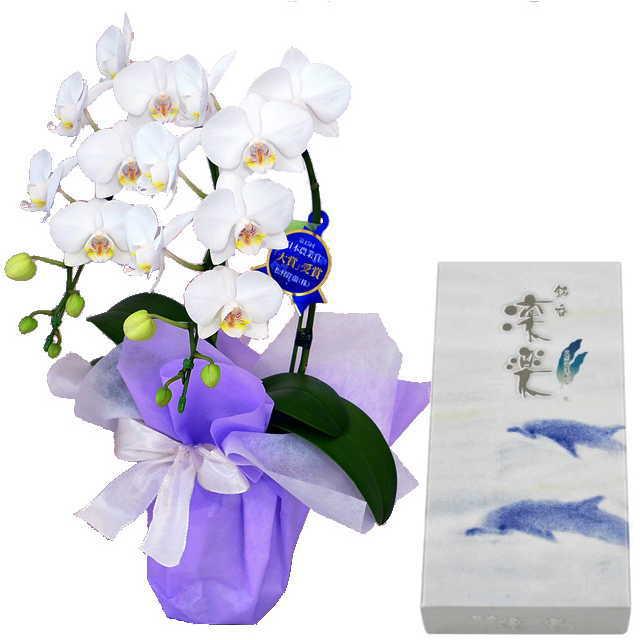 ミディ胡蝶蘭 線香セット 2本立 白色 丸叶むらた 銘香 凛楽 天然海藻配合 バラ詰 約80g
