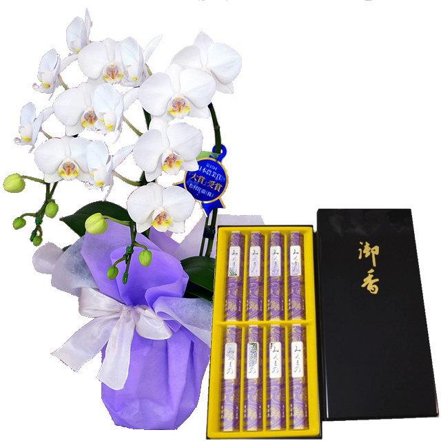 胡蝶蘭 ミディ 線香 セット 鳩居堂 みくまの 進物 熨斗 アマビリス 白色