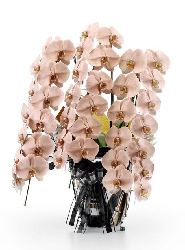 胡蝶蘭 8本立ち 112輪 白色 みやび ブロンズ 特別仕様 ダイヤモンド 御祝(黒) バタフライラッピング