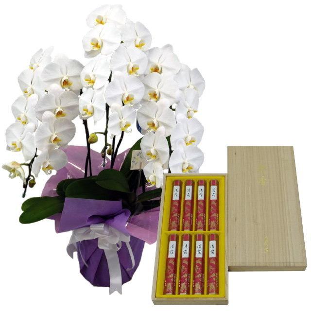 胡蝶蘭 白色 3本立ち 鳩居堂のお線香 清靄 せいあい セット 選べるお供えラッピング