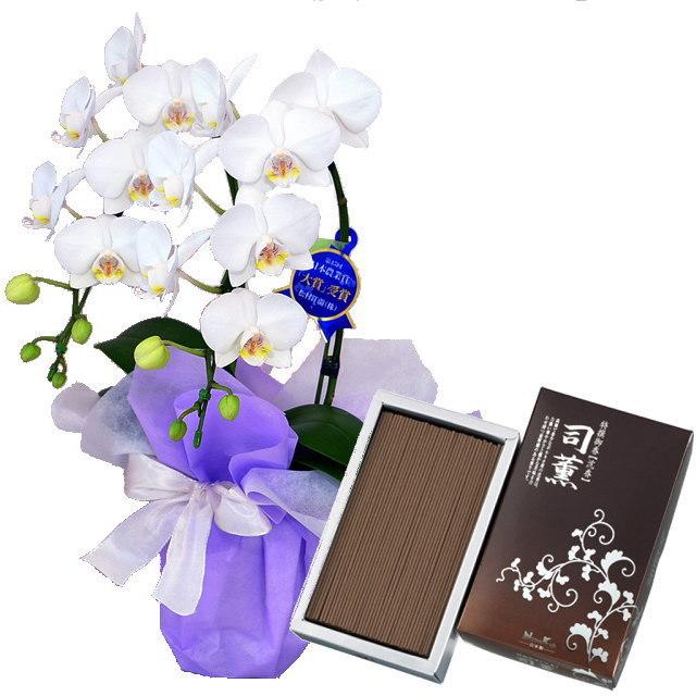 ミディ胡蝶蘭 白色 2本立ち 日本香堂のお線香 司薫 しくん 沈香 バラ詰 #23902 セット