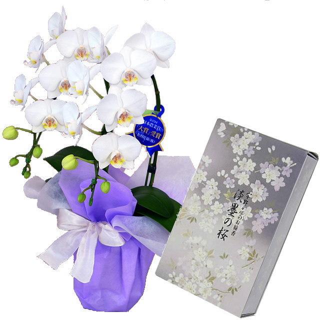 ミディ胡蝶蘭 白色 2本立ち 日本香堂のお線香 宇野千代 淡墨の桜 バラ詰 セット