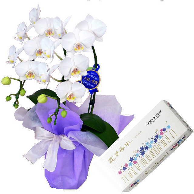 ミディ胡蝶蘭 線香セット 2本立 白色 玉初堂 花すみれ 小バラ詰