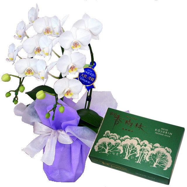 ミディ胡蝶蘭 白色 2本立ち 玉初堂のお線香 清澄香樹林 大バラ #6681 セット