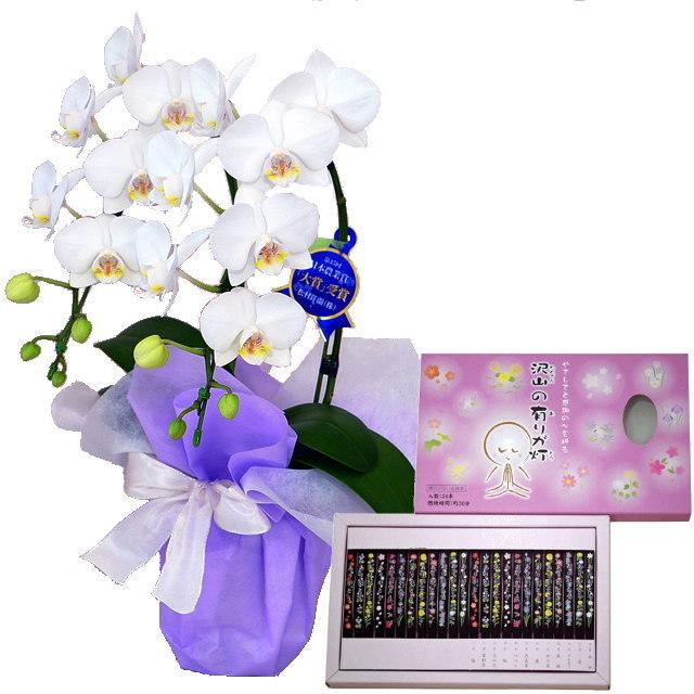 ミディ胡蝶蘭 白色 2本立ち 丸叶むらたのお線香 沢山の有りが灯 香 24本入 セット