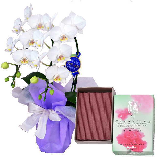 ミディ胡蝶蘭 線香セット 2本立 白色 日本香堂 花風 カーネーション ミニ