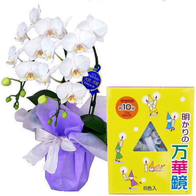 ミディ胡蝶蘭 ローソクセット 2本立 白色 好香屋のろうそく 明かりの万華鏡 10分 75g 紙箱入