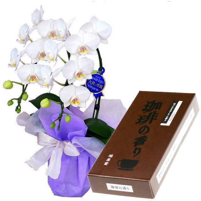 ミディ胡蝶蘭 線香セット 2本立 白色 鳩居堂 珈琲の香り