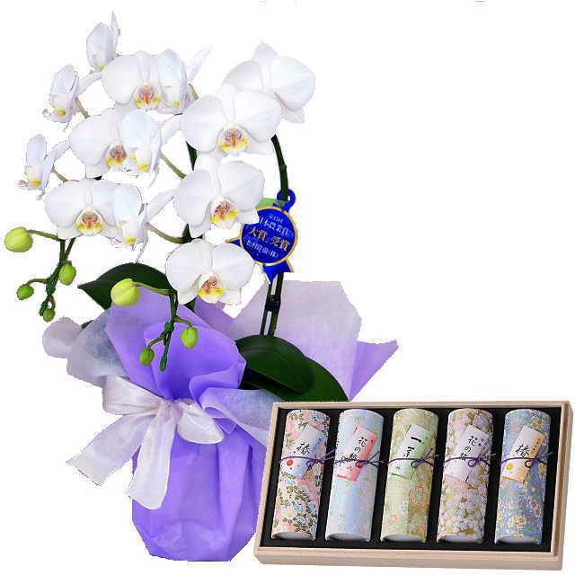 ミディ胡蝶蘭 線香セット 2本立 白色 奥野晴明堂 花くらべ 5本入り アソート 椿赤 桜 一葉 紅梅 椿黄