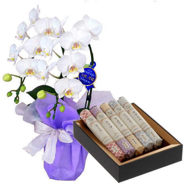 ミディ胡蝶蘭 線香セット 2本立 白色 鳩居堂 線香組合せ 花の香り