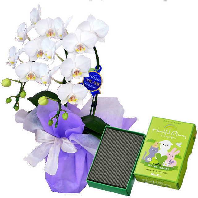 ミディ胡蝶蘭 2本立 ミディ 白色 お供え ペット 日本香堂 ハートフルメモリー 草原の香り