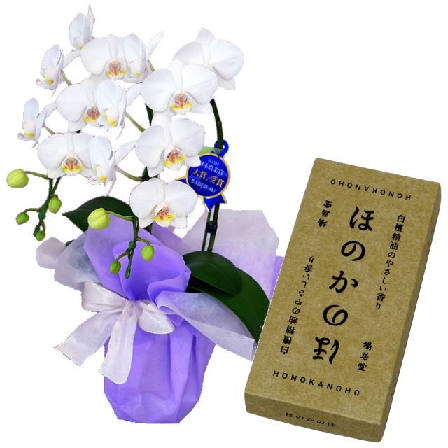 鳩居堂のお線香 ほのかのほ 特選ミディ胡蝶蘭 2本立ち 白色 4号鉢 お供えラッピング セット