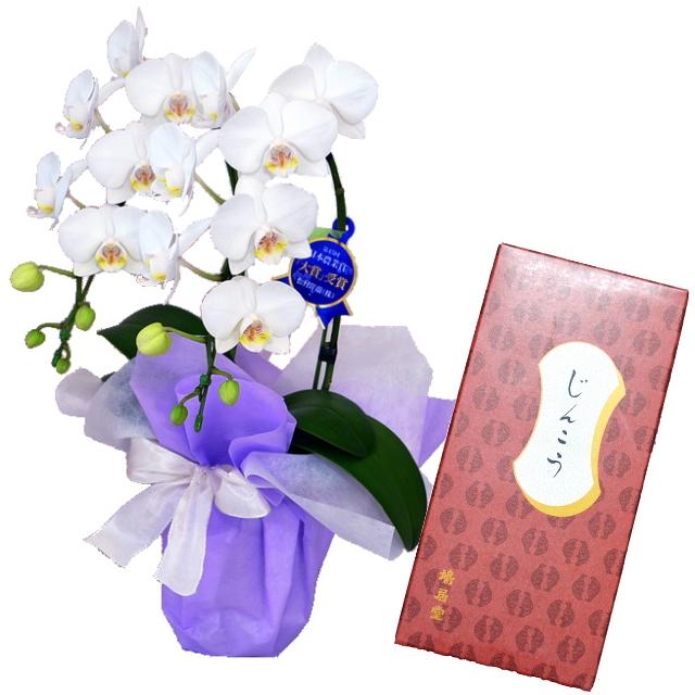 鳩居堂のお線香 じんこう 紙箱 バラ詰 特選ミディ胡蝶蘭 2本立ち 白色 4号鉢 お供えラッピング セット