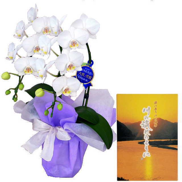 ミディ胡蝶蘭 線香セット 2本立 白色 丸叶むらた 川の流れのように 藤の香り 約140g 煙少タイプ