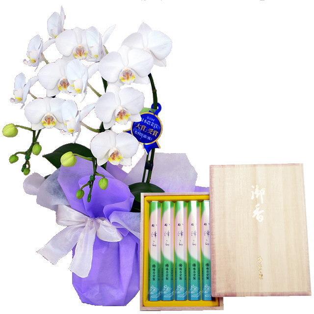 ミディ胡蝶蘭 白色 2本立ち 鳩居堂のお線香 か津ら セット