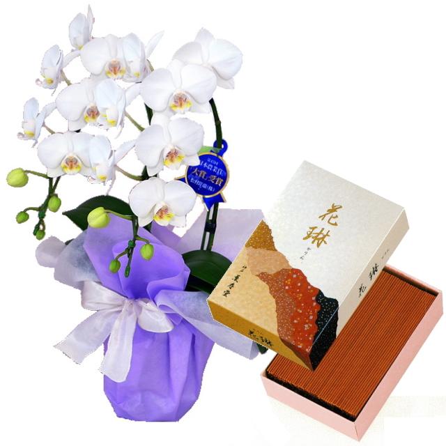 薫寿堂のお線香 花琳 大バラ #21 特選ミディ胡蝶蘭 2本立ち 白色 4号鉢 お供えラッピング セット