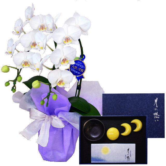 ミディ胡蝶蘭 白色 2本立ち 丸叶むらたのお線香&ローソク 月の想い お月さまろうそくギフト 蝋梅の香り #TO-05 セット