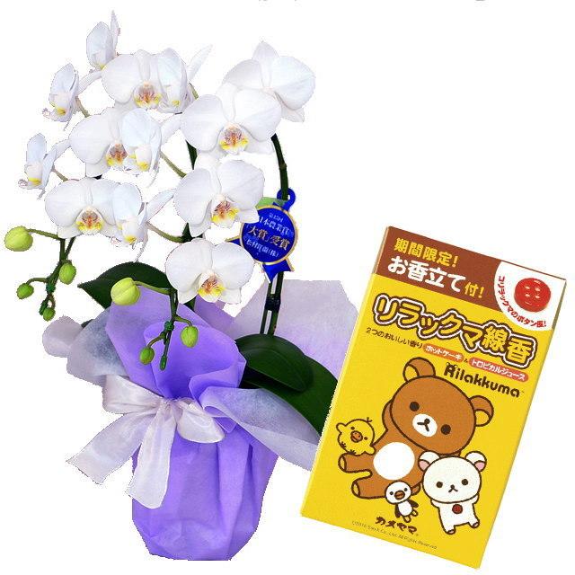 胡蝶蘭 2本立ち 白色 アマビリス ギフト ミニ ミディ 小さい 小型 テーブル 送料無料 お供え 法事 新盆 カメヤマ リラックマ線香