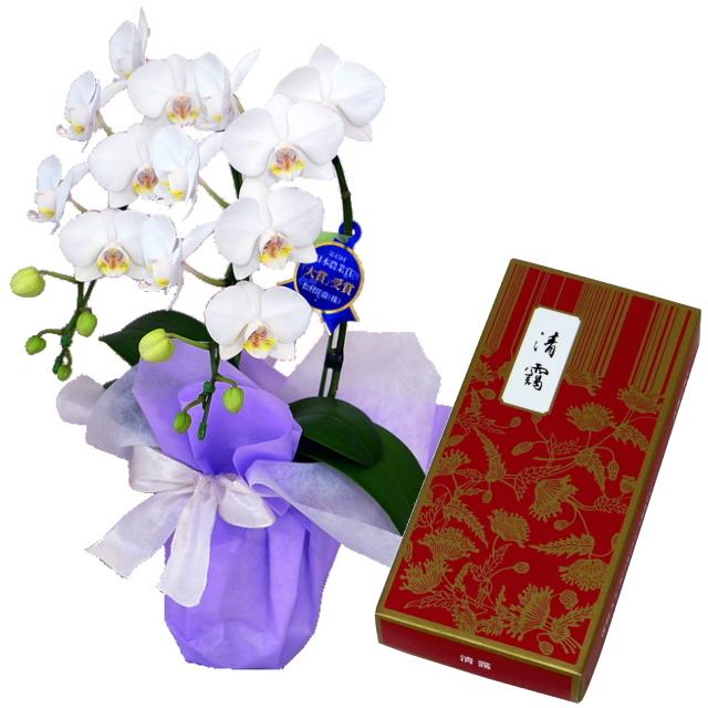 鳩居堂のお線香 清靄 紙箱 バラ詰 特選ミディ胡蝶蘭 2本立ち 白色 4号鉢 お供えラッピング セット