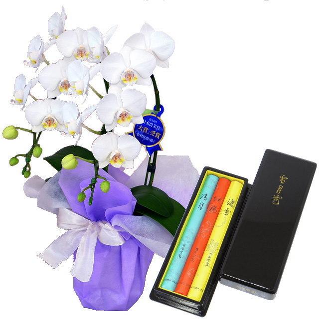 ミディ胡蝶蘭 白色 2本立ち 鳩居堂のお線香 雪月花 セット