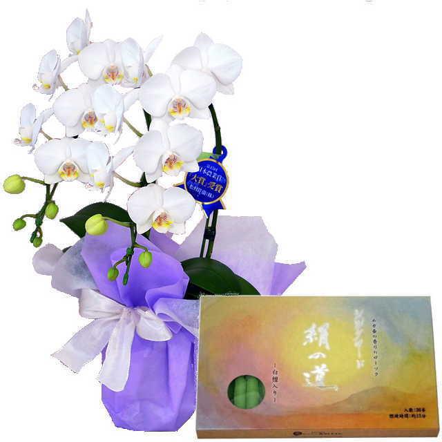 ミディ胡蝶蘭 ローソクセット 2本立 白色 丸叶むらた ろうそく シルクロード 絹の道 灯 白檀の香り 36本入