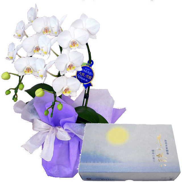 ミディ胡蝶蘭 線香セット 2本立 白色 丸叶むらた 月の想い お月さま線香 大バラ