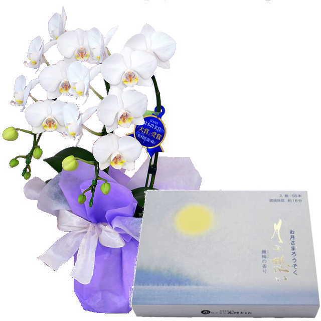 ミディ胡蝶蘭 ローソクセット 2本立 白色 丸叶むらた ろうそく 月の想い お月さまろうそく 56本入