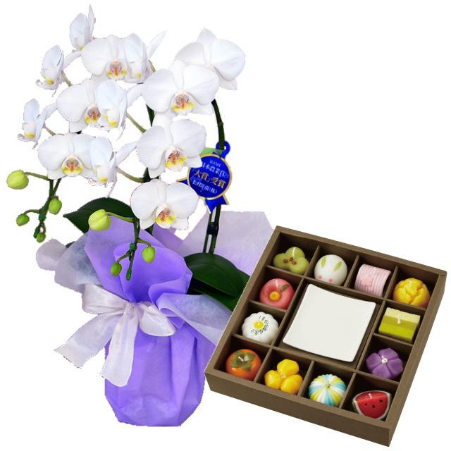 カメヤマ キャンドル 和菓子づくしギフトセット 特選ミディ胡蝶蘭 2本立ち 白色 4号鉢 お供えラッピング セット