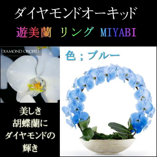 胡蝶蘭 お祝い 2本立ち ブルー ダイヤモンド オーキッド MIYABI 大輪 リング ギフト