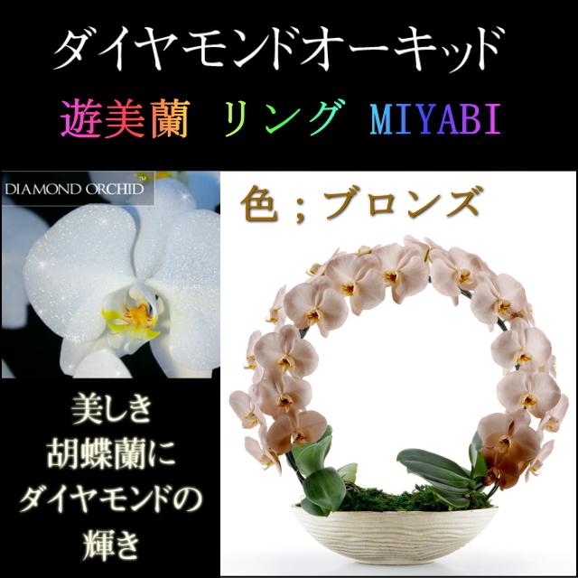 胡蝶蘭 お祝い 2本立ち ブロンズ ダイヤモンド オーキッド MIYABI 大輪 リング ギフト