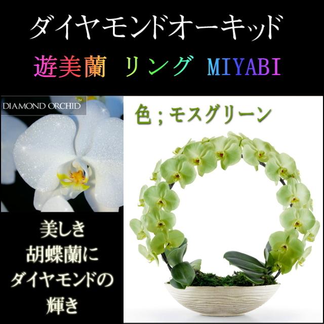 胡蝶蘭 お祝い 2本立ち モスグリーン ダイヤモンド オーキッド MIYABI 大輪 リング ギフト