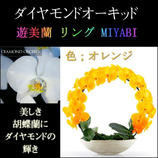 胡蝶蘭 お祝い 2本立ち オレンジ ダイヤモンド オーキッド MIYABI 大輪 リング ギフト