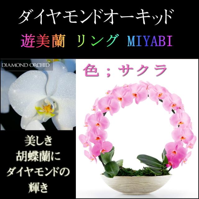 胡蝶蘭 お祝い 2本立ち サクラ ダイヤモンド オーキッド MIYABI 大輪 リング ギフト