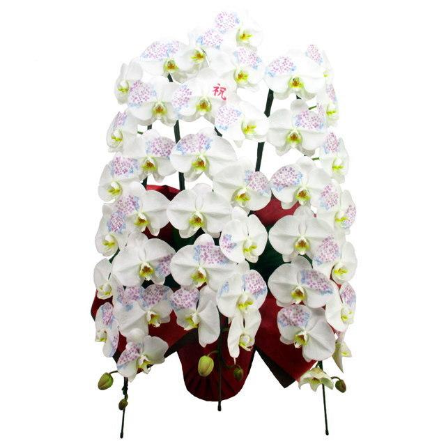 胡蝶蘭 化粧蘭 祝 文字入り 3本立ち 36輪前後 季節の絵柄 アジサイ 仕立て
