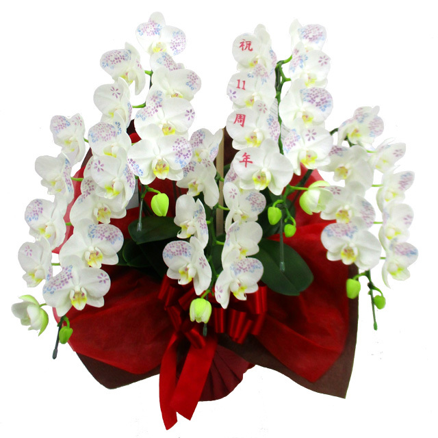 胡蝶蘭 化粧蘭 周年記念 文字入り 5本立ち 60輪前後 アジサイ 小花 仕立て