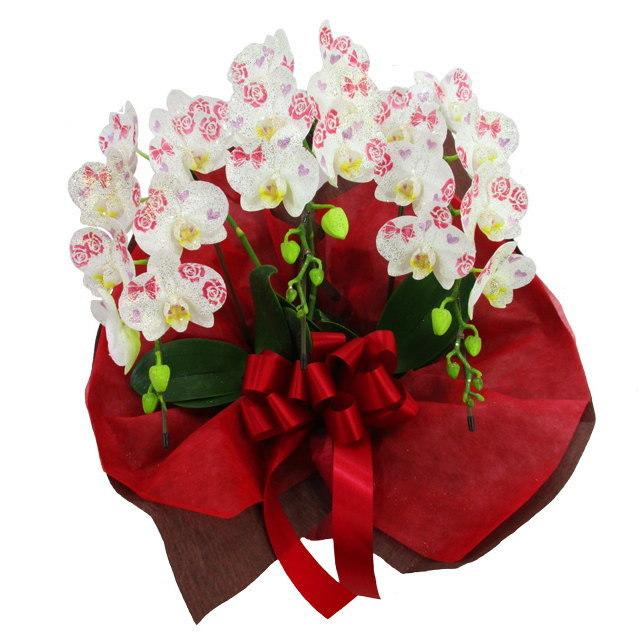 化粧蘭 胡蝶蘭 3本立ち 蝶柄 誕生日祝 花 ケショウラン コチョウラン ギフト ミディ 送料無料 お祝い 誕生日