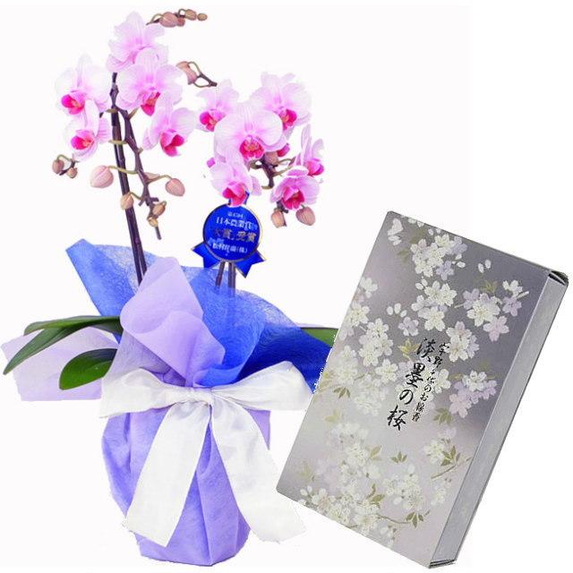 ミディ胡蝶蘭 ピンク色 2本立ち 日本香堂のお線香 宇野千代 淡墨の桜 バラ詰 セット