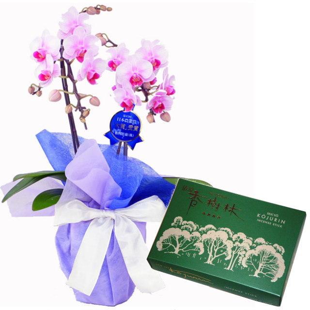 ミディ胡蝶蘭 ピンク色 2本立ち 玉初堂のお線香 清澄香樹林 大バラ #6681 セット