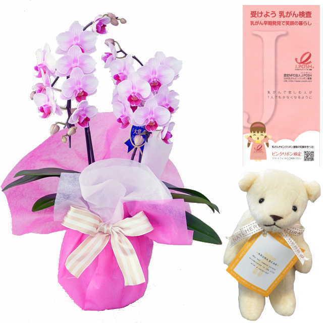 ピンクリボン 運動 応援 ミディ胡蝶蘭 2本立 ピンク色 アロマベアー ホワイト クマさん セット