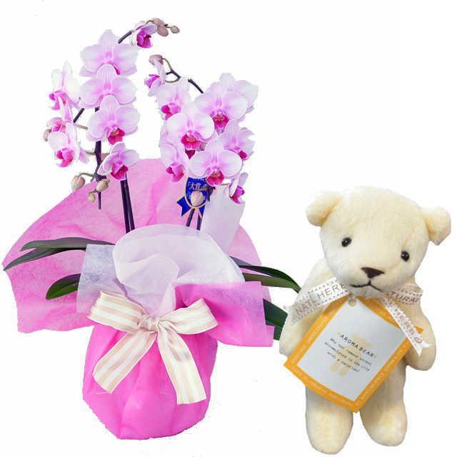 ミディ胡蝶蘭 2本立 ピンク色 アロマベアー ホワイト クマさん セット