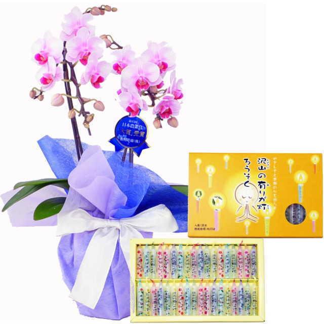 ミディ胡蝶蘭 線香セット 2本立 ピンク色 丸叶むらた 沢山の有りが灯 ろうそく