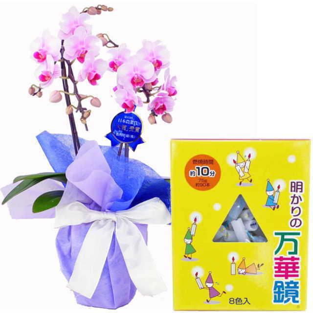 ミディ胡蝶蘭 ローソクセット 2本立 ピンク色 好香屋のろうそく 明かりの万華鏡 10分 75g 紙箱入