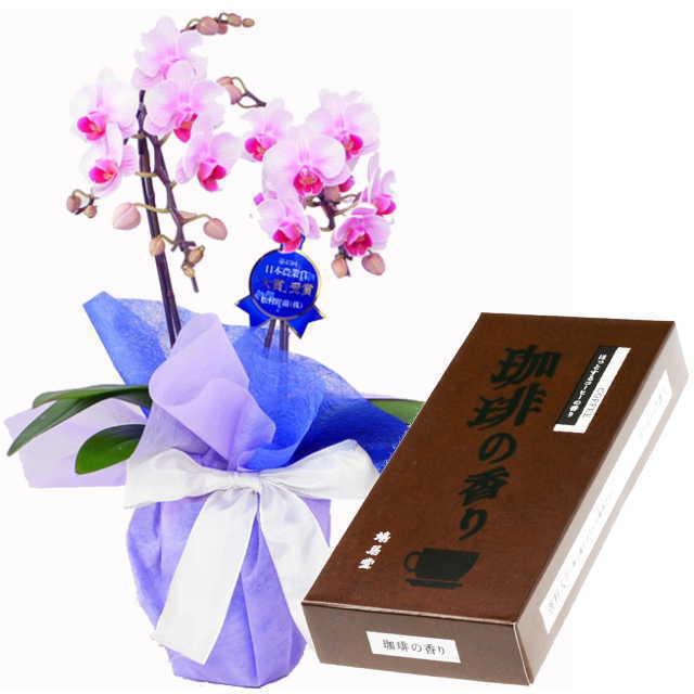 ミディ胡蝶蘭 線香セット 2本立 ピンク色 鳩居堂 珈琲の香り