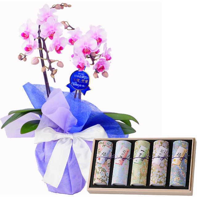 ミディ胡蝶蘭 線香セット 2本立 ピンク色 奥野晴明堂 花くらべ 5本入り アソート 椿赤 桜 一葉 紅梅 椿黄