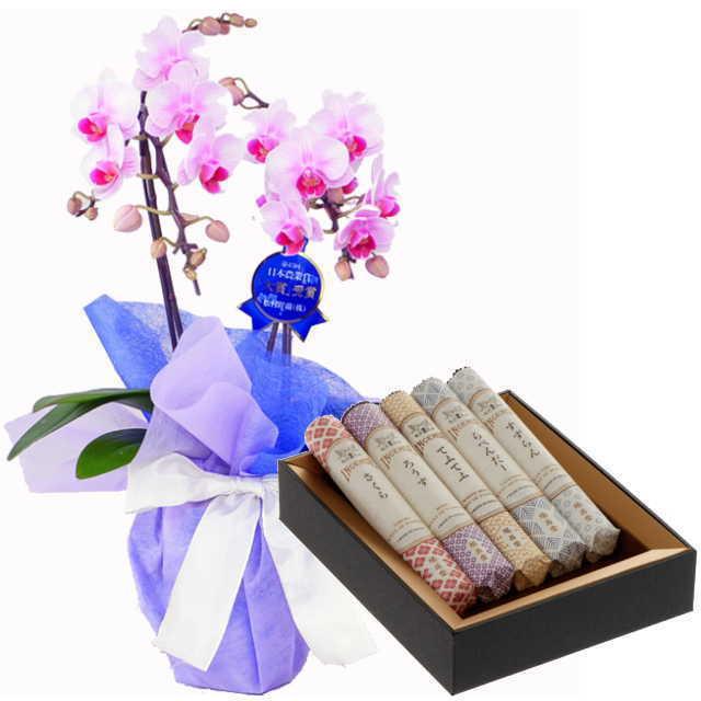 ミディ胡蝶蘭 線香セット 2本立 ピンク色 鳩居堂 線香組合せ 花の香り