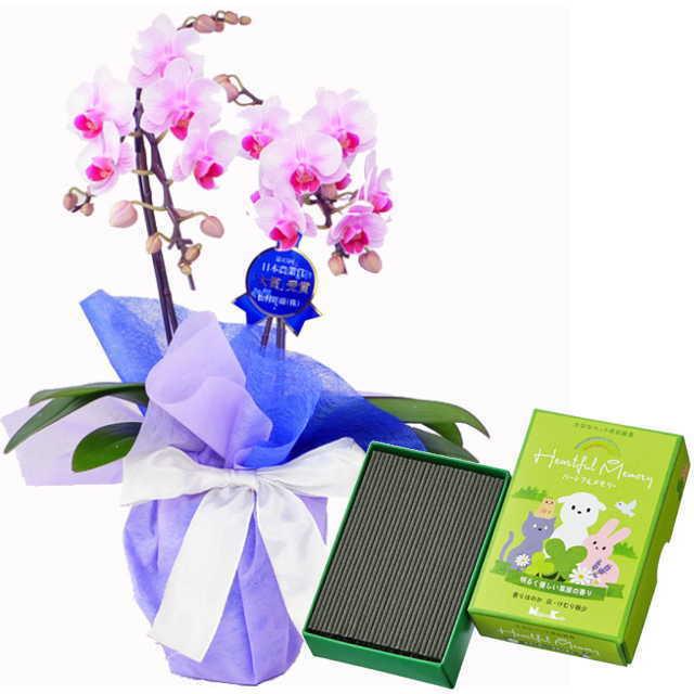 ミディ胡蝶蘭 2本立 ミディ ピンク色 お供え ペット 日本香堂 ハートフルメモリー 草原の香り
