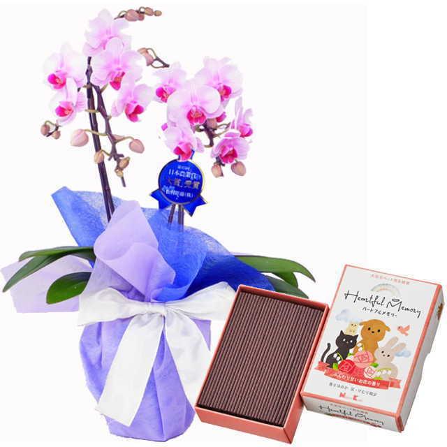ミディ胡蝶蘭 2本立 ミディ ピンク色 お供え ペット 日本香堂 ハートフルメモリー お花の香り