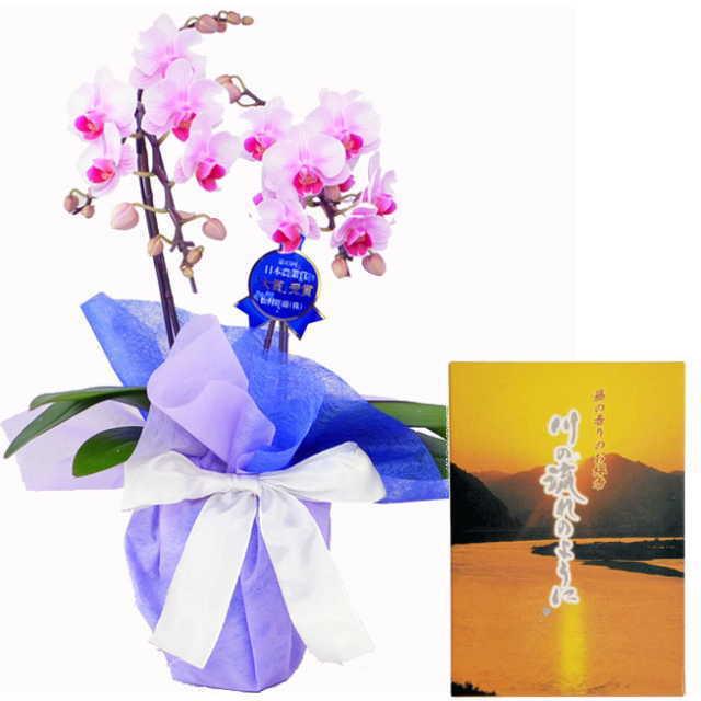 ミディ胡蝶蘭 線香セット 2本立 ピンク色 丸叶むらた 川の流れのように 藤の香り 約140g 煙少タイプ